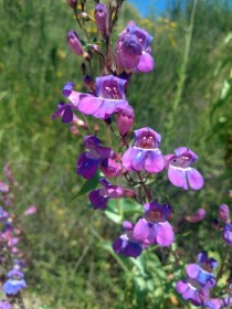 Wildflowers - Photo 2
