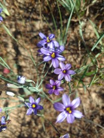 Wildflowers - Photo 3