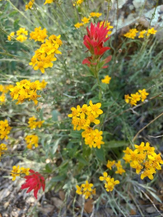 Ojai 2 - Wildflowers